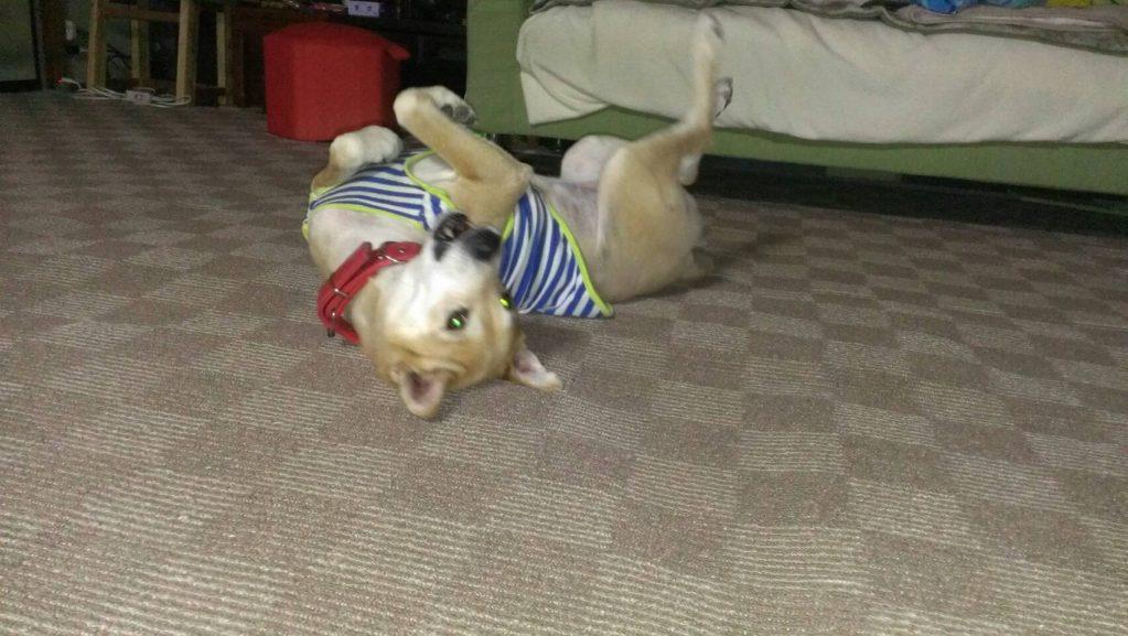 床で背中をこする犬