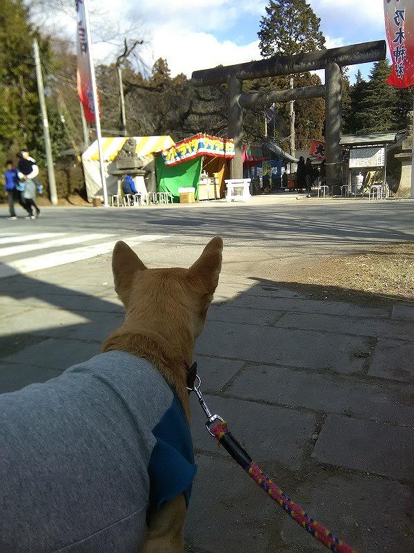 乃木神社初詣です