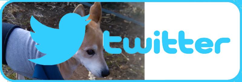 (twitter)私の犬ブログ