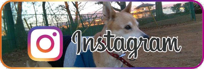 (instagram)私の犬ブログ