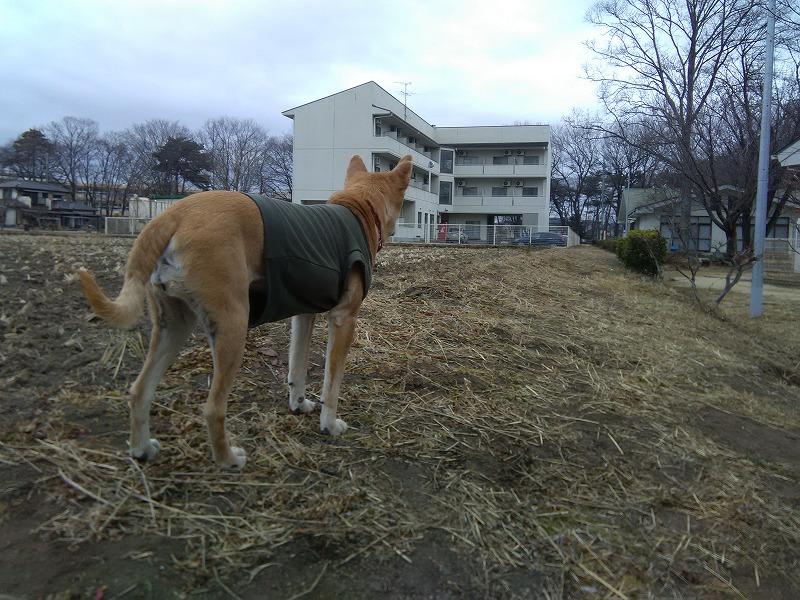 久々に遠くを見る犬です♪