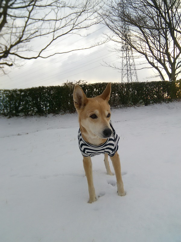 雪冷たいぃーパート2